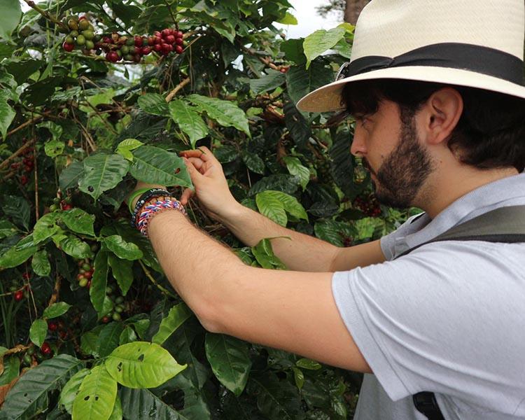 Davide Roveto, piantagione caffè